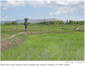 Agriculture Short-Changed in Haiti's Post-Quake Recovery  Lack of rural jobs threatens reconstruction effort