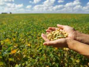 Food price fears as US warns on crop yields