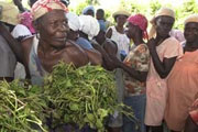 Farmers' fear of cholera threatens rice harvest in Haiti – UN agency