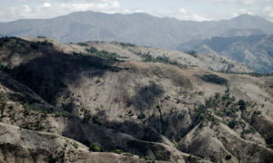 Haiti to plant millions of trees to boost forests and help tackle poverty
