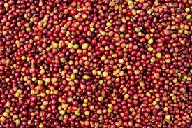 Clinton, Four Seasons to Help Haiti Coffee Farms