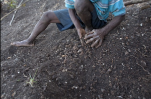 Drought in Haiti ravages crops for farmers