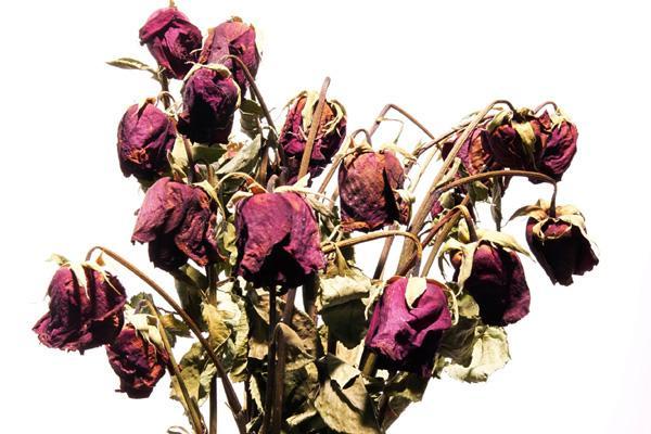 Dead Flowers Img M691b8a3137efc7f63822523b06eecd5e