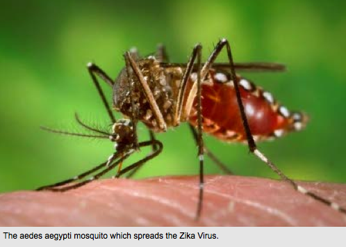 Brazilians panic as mosquito-borne virus is linked to brain damage in thousands of babies