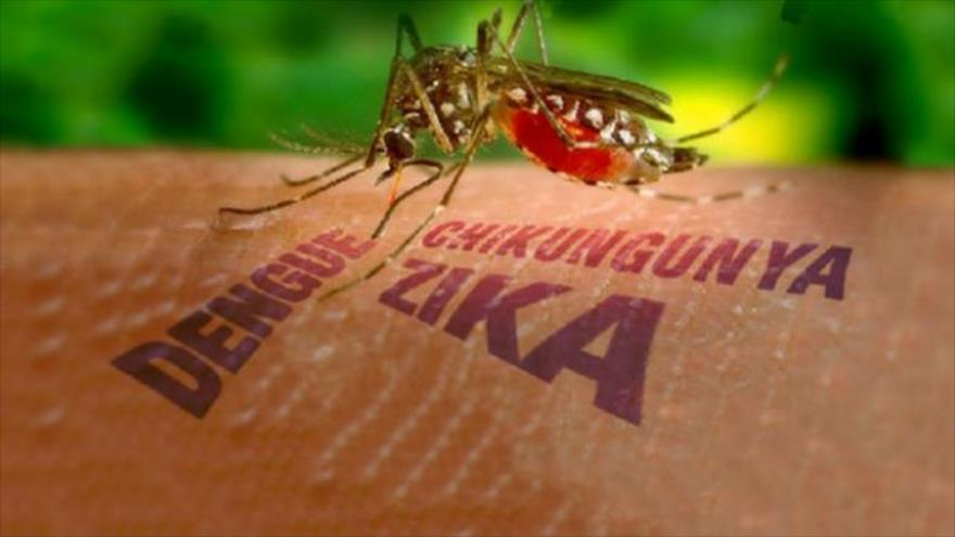 Volunteering for Infection in Hunt for Dengue, Zika Vaccines
