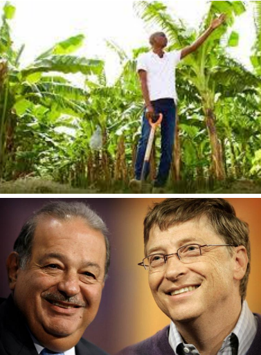 Mexico Lab Ships Largest GMO Corn Seed Shipment to Haiti- Added COMMENTARY By Haitian-Truth