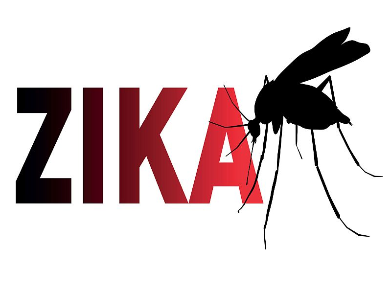 Genetically engineered mosquitoes could wipe out Zika, but some in Dallas County oppose local trials
