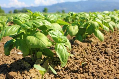 Agricultural Policy Forum analyses strategies in the Caribbean