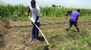 U.S. Support for UN Farmer Field Schools Promotes Rural Development in Haiti