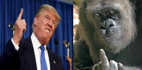 TRUMP- THE 800 POUND GORILLA-  SCREWS HAITI, AGAIN, AND AGAIN, AND AGAIN AFTER PROMISING TO BE OUR GREATEST ADVOCATE DURING CAMPAIGN